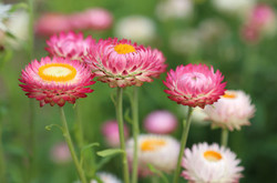 Flowers398941_640