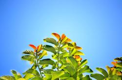 Leaves241701_640