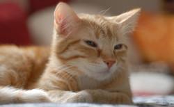 Cat1644545_640