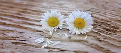 Flowers747345_640