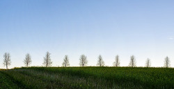Trees1740284_640