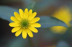 Flower247409_640