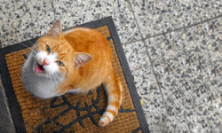 Cat2429944_640