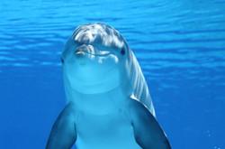 Dolphin203875_640
