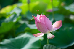 Flowers1113820_640