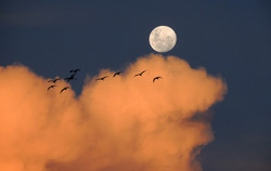 Moon323425_640