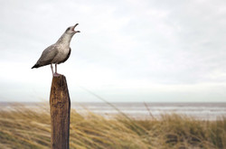 Seagull2518661_640