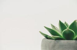 Plant2004483_640