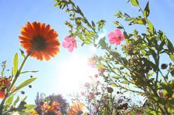 Flowers980162_640