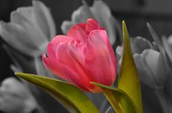 Flower143489_640