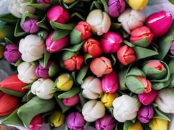 Tulips1246264_640