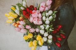 Tulips2617216_640