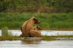 Bears2035489_640