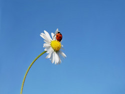 Ladybug2667778_640_2