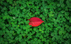 Leaves1822985_640