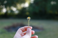 Flowers1428760_640