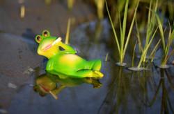 Frog2082984_640