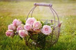 Roses1566792_640