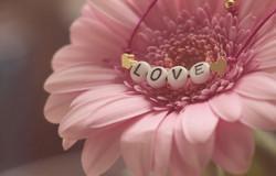 Love3388622_640