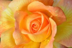 Flower3037302_640
