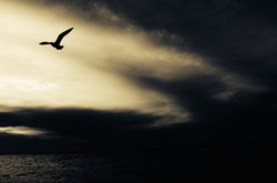 Seagull768785_640