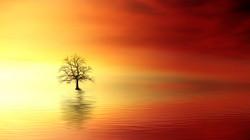 Sunset3156440_640